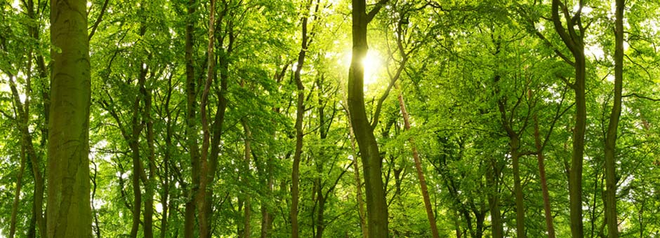 trees with sun shining through