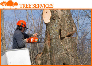tree surgeon cutting a tree with a chainsaw